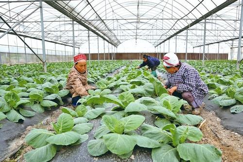 发展蔬菜产业促农增收