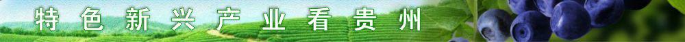 特色新兴产业看贵州