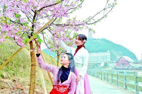 黔东南原创歌曲《半城山水半城樱》唱出了春天的模样